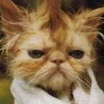 kittybadhaircut