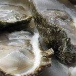 oysters shucked