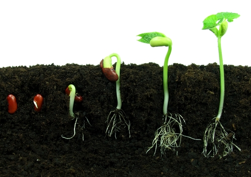 http://tonyrollo.com/content/wp-content/uploads/2013/05/seed_to_plant_growth.jpg